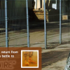 Jan 13 on FM: Military Women 'Outside the Wire' & Music from Sheila Nicholls